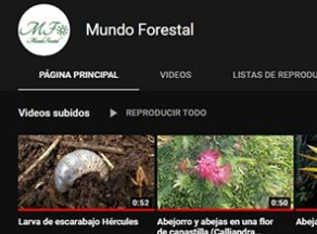videos-youtube-G